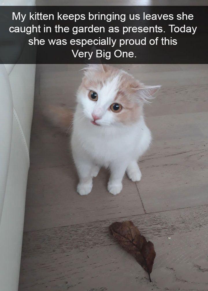 24 Funny Memes Animals Kittens Lustige Bilder Von Tieren Tier