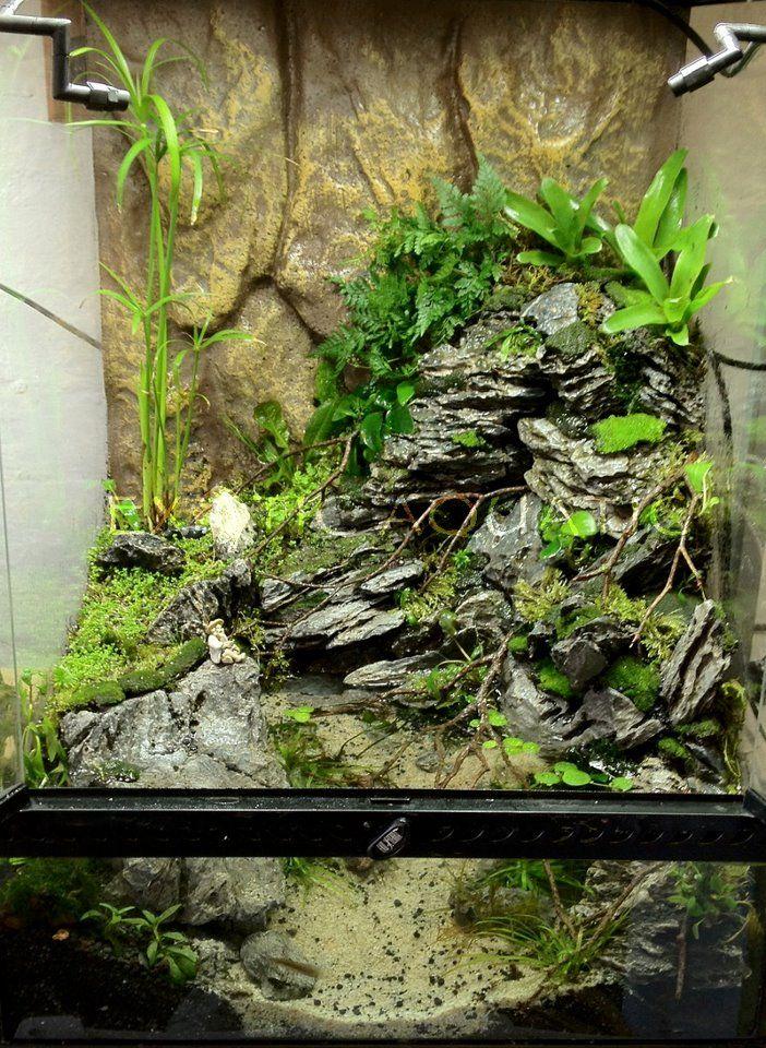 Pin By Stephanus Mardianto On Aquascape Frog Terrarium
