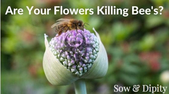 Are Your Flowers Killing Bee's? Neonic's may be coming home with you from the garden store!