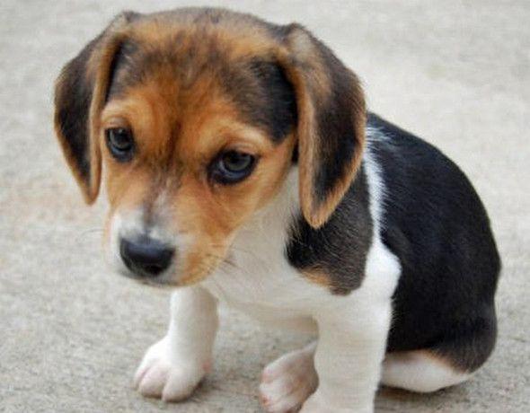 Wie heißt der süße Hund? – Kaley Leonard
