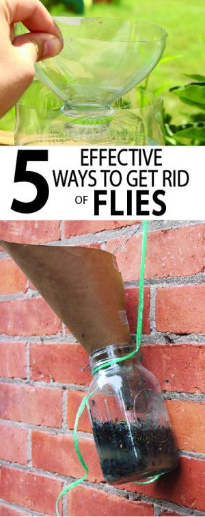 Flies are a quick way to ruin a perfectly good picnic. I've researched several ways to get rid of flies with homemade fly traps and the results are amazing. Learn more...