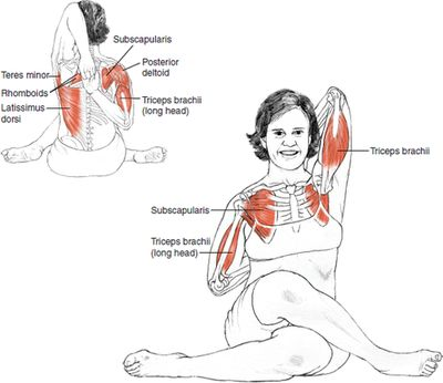 Gomukhasana Cow-Faced Pose © Leslie Kaminoff's Yoga Anatomy B E N E F I T S — Stretches the ankles, hips and thighs, shoulders, armpi...