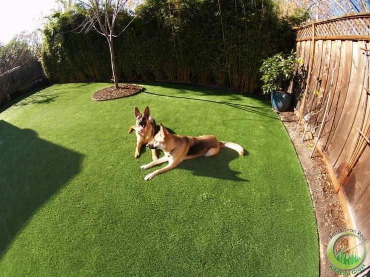 Backyard Dog Run Ideas heres mine Artificial Synthetic Dog Running Area Installed In A Backyard In Sunnyvale Santa Clara County
