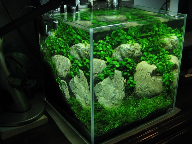 Java Moss Carpet - Carpet Vidalondon | Tropical fish ...