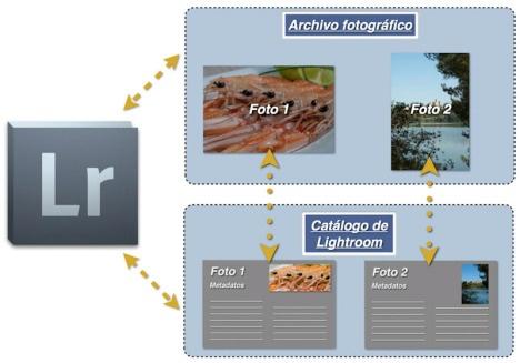 Lightroom gestiona las fotos a través de su catálogo