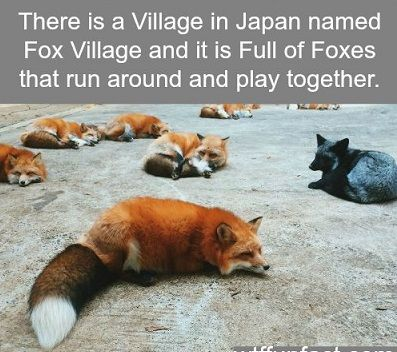 Are we ignoring the BLACK friggin' fox to the right? Because i want a black friggin' fox.