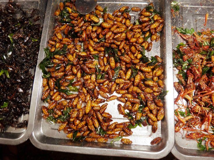 Fried caterpillar... Thailand