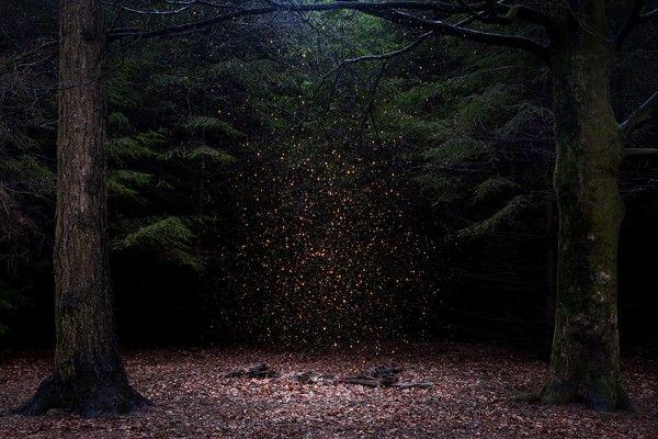 """Stars-14 Kunstenaar Ellie Davis  Ellie Daviesis een getalenteerde multimedia kunstenaar. Al zeven jaar lang verandert zij de bossen en landschappen van het Verenigd Koninkrijk in prachtige en spookachtige kunstwerken met haar fotografie.  """"Deze aangepaste landschappen functioneren op een aantal niveaus. Ze zijn een weerspiegeling van mijn persoonlijke relatie met het bos, een meditatie over universele thema's die betrekking hebben op de psyche en het in twijfel trekken van het concept van…"""