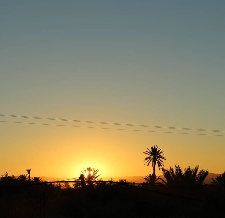 Arrived in Marrakech and drove 4 hours to skoura to see the first sunrise. It was a magic moment full of warmth on my heart but cold in my feet. #nofilter #sunrise #skoura #maroc #palmtrees #skyporn #beautiful #peaceful #travel #backpack #landscape #goodvibes #canon