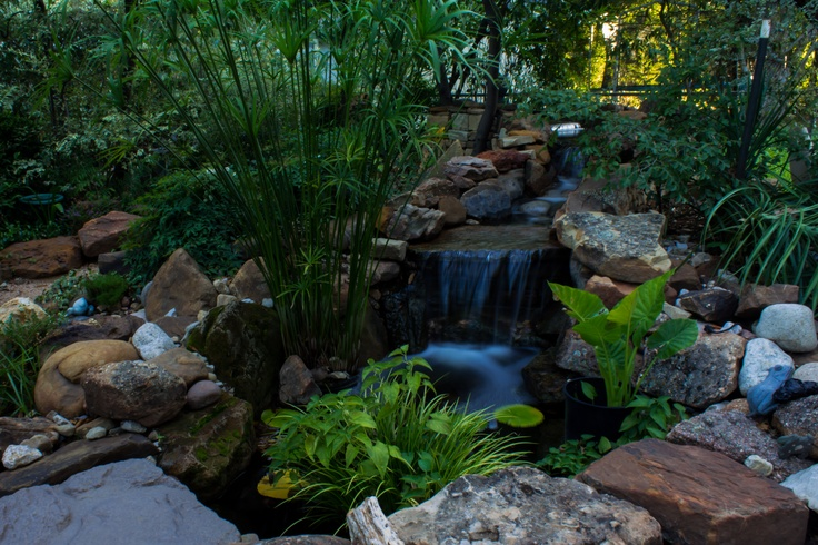 Shade loving pond plants water feature pinterest for Outside pond plants