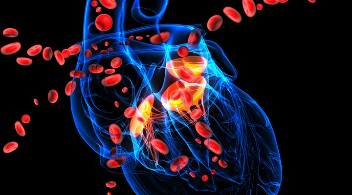Atherosclerosis and Cardiovascular Disease - Endothelial, Fibrinogen, Vitamin K - Life Extension Health Concern