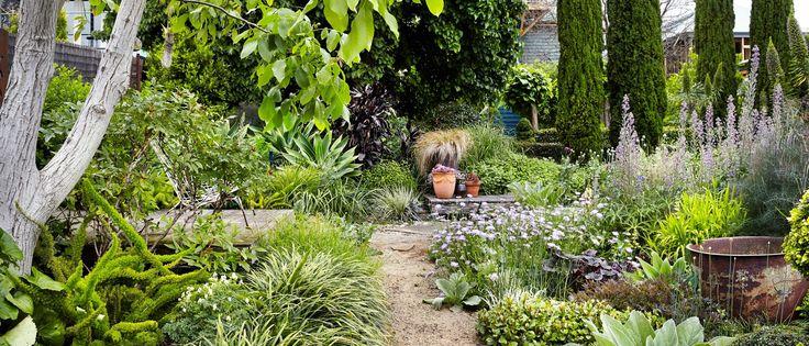 Robyn Prent's garden, Moonee Ponds, Australia