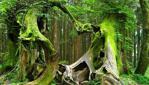 Os moradores temem a  Floresta Hoia e se recusam a entrar além da linha das árvores