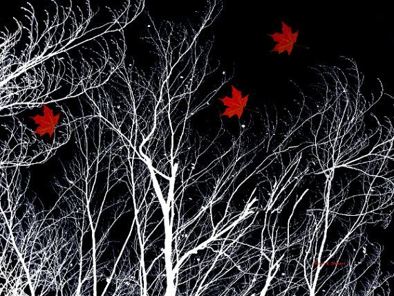 Red Maple Leaf Abstract Realism White Bare Tree by GrayWolfGallery