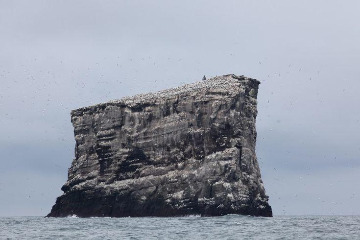 Eldey, last refuge of the great auk.