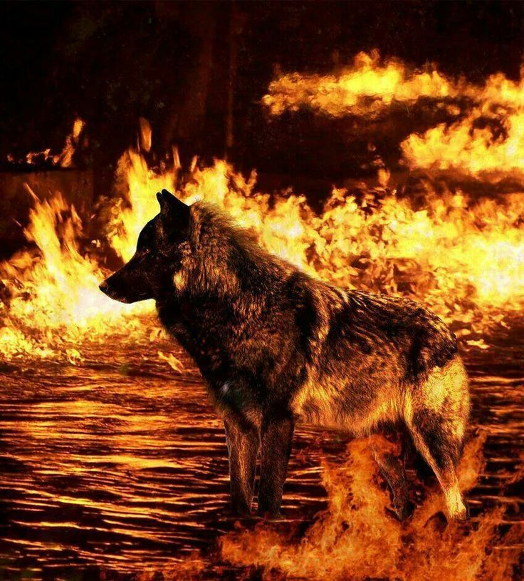 Wolf Of Fire Pin by Mariette...