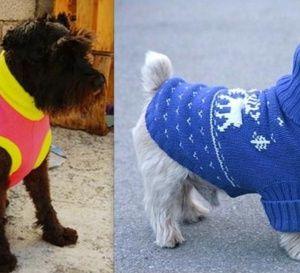 Confectionner un manteau pour un petit chien, les tutos créations.