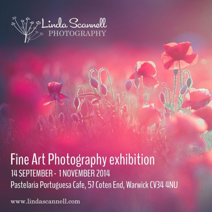 Fine Art Photography Exhibition in Warwick | Linda Scannell | Pastelaria Portuguesa cafe