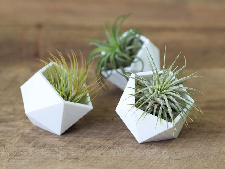 A fun, modern and sustainable way to display your air plants. These small Geometric Air Plant Holders sit table top to showcase the natural beauty of the Tillandsia they house. Sold in a set of 3 Geom