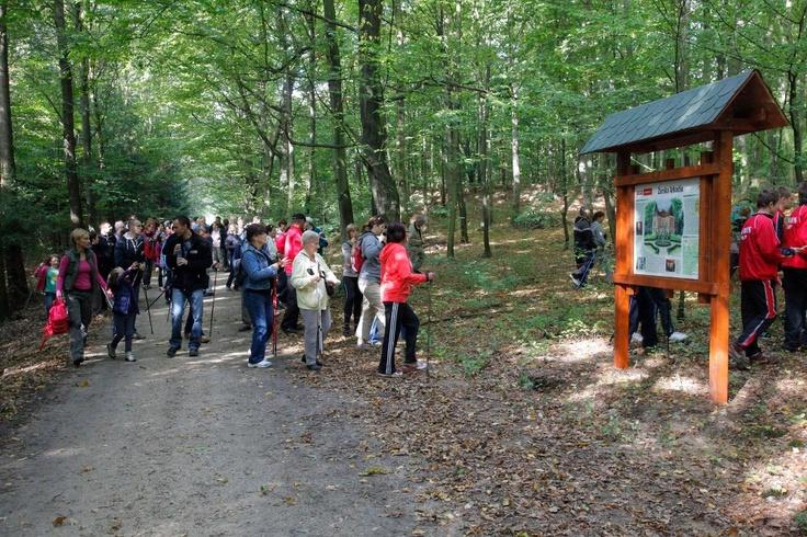 Niebieski szlak w Zielonym Lesie w Żarach