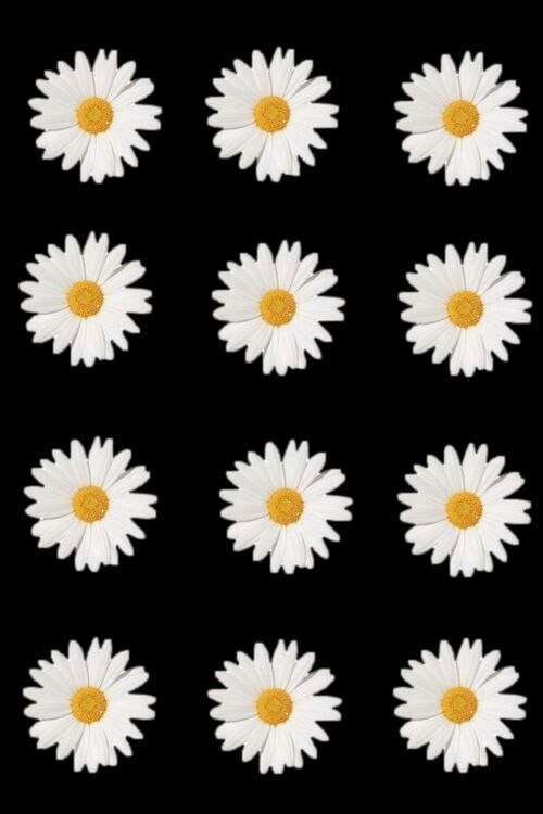 Nice Wallpaper Iphone X Tumblr 200 Wallpapers In 2019 Daisy