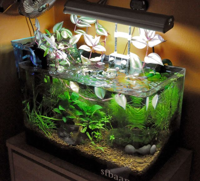 17 Best Images About Project Fish Tank On Pinterest: 17 Best Images About Bettas! On Pinterest