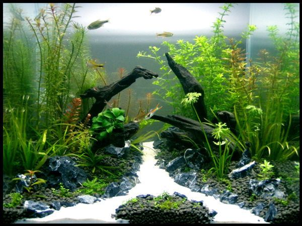 Tank aqua one 30cm cube substrate up aqua soil filter for Co2 fish tank