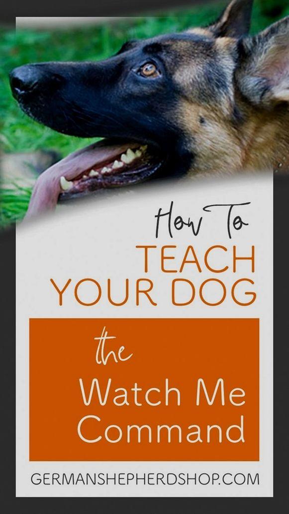 Total Recall Dog Training Hugo Mn Dog Training Ohio Dog