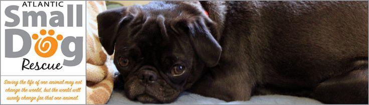 Atlantic Small Dog Rescue Nova Scotia