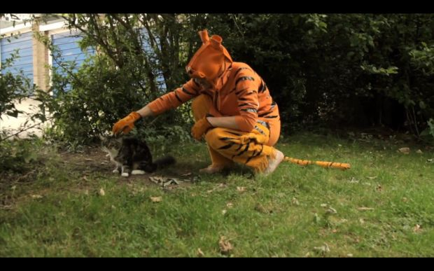 Show me tiger style stephen malkmus cat style pinterest - Show me a picture of the tiger ...