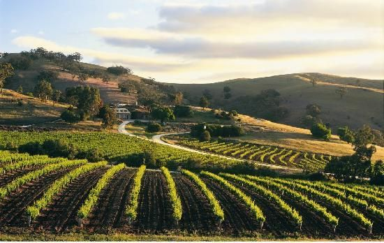 Then it would be time to take mum to the gorgeous Barossa Valley in our home state South Australia...
