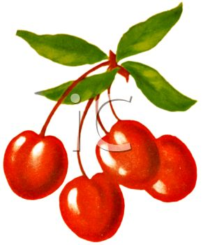 Vintage illustration of a bunch of cherries.