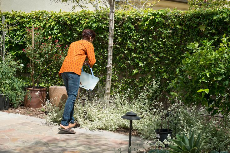 TIP:  Use a bucket to catch water when you're waiting for the shower water to get warm and then use it on your outside plants.