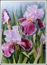 Judy Sleight, Artist in Oils - Sale Gallery