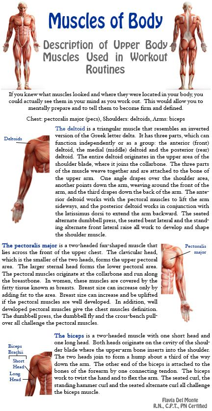 Muscles of the Body! I want you to understand the muscles of the body so that you know where to focus on when doing exercises geared towards specific body parts. http://www.flaviliciousfitness.com/blog/2013/07/23/fitness-tips-for-women-5/