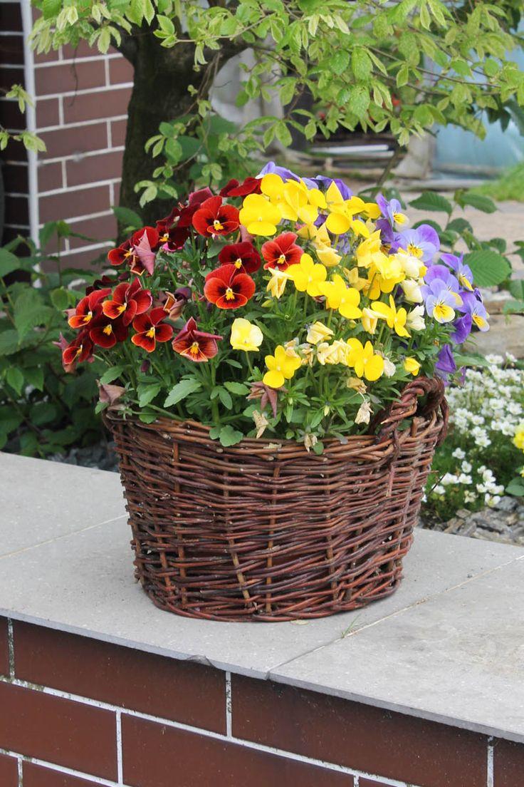 Wiklinowy koszyk jako osłona na ulubione kwiaty doniczkowe