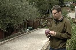 Bocce Ball Dimensions, surface materials & design tips for backyard bocce courts