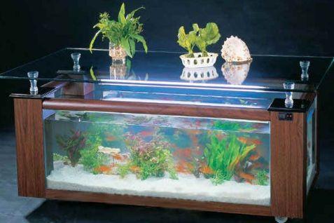 Harga Aquarium Ikan