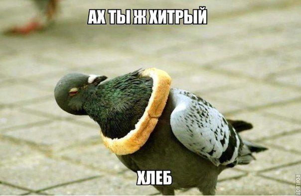 Ах ты ж хитрый хлеб