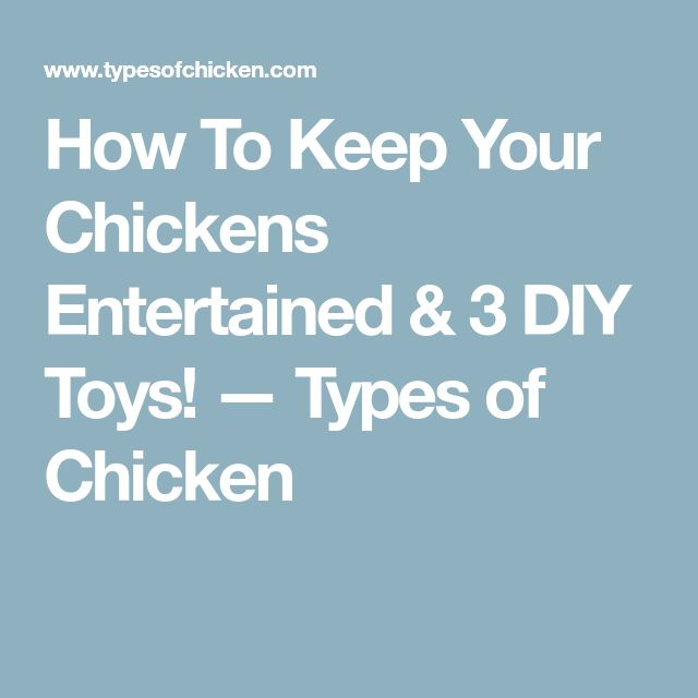 How To Keep Your Chickens Entertained & 3 DIY Toys! — Types of Chicken