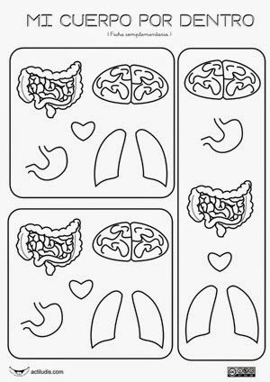 Imprimibles del cuerpo humano: órganos