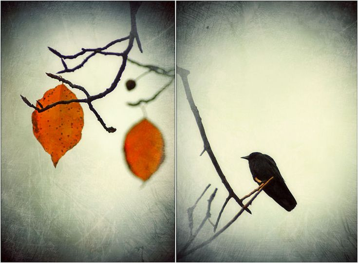 #bird #autumn #tree #fall