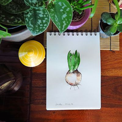 CaroLigne...: JacintheLes plantes à bulbe se réveillent dans nos...