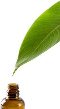 L'huile essentielle de Ravintsara pour l'hiver, par Julien Kaibeck, sur lessentieldejulien.com