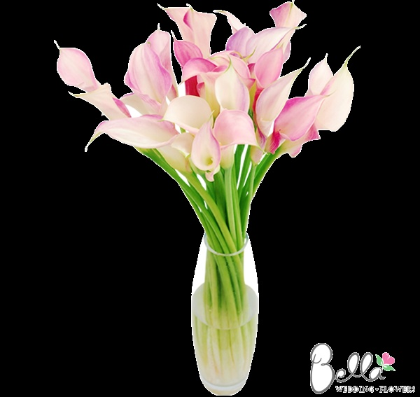 Pink and White mini calla lilies have exceptionally pretty trumpet-shaped blooms with a hint of a wavy edge. Their gorgeous color and sleek lines look spectacular in hand tied bouquets and mix well with other types of wedding flowers. Although they may look delicate and graceful, mini calla lilies are actually quite hardy flowers, making them especially easy to work with. As always, our pink and white mini callas are shipped directly from the grower. $249