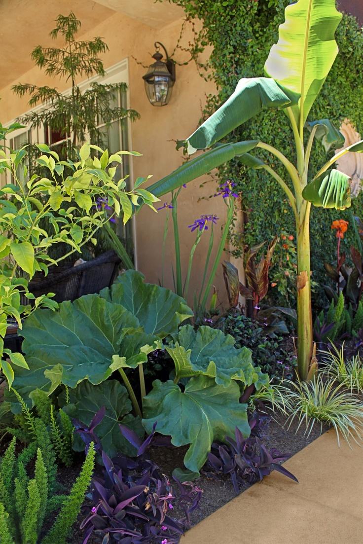 Tropical edible landscaping from Star Apple (rhubarb, banana & citrus). Modern Potager (ornamental vegetable/kitchen garden)