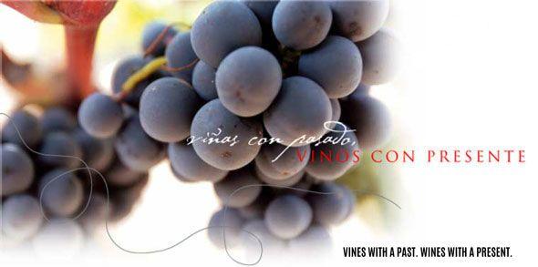 Biologischer Wein, die perfekte Ergänzung für mit Eichel gefütterten iberischen Schinken ✔ Welche Nahrungsmittel und Getränke passen am Besten zu Eichel-Schinken? - Finden Sie es heraus bei ecoGourmetShop.de