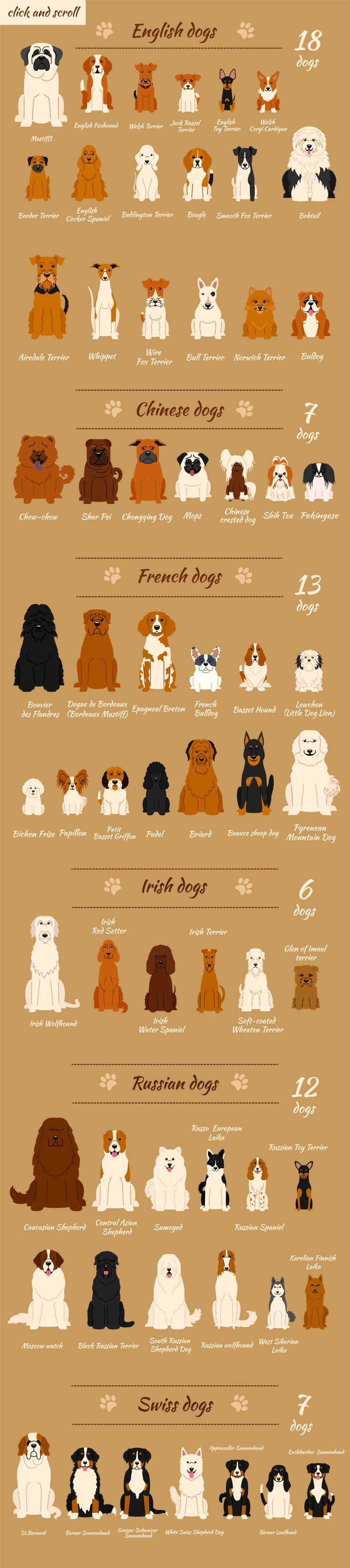Collection of different dogs by Mallinka on @creativemarket