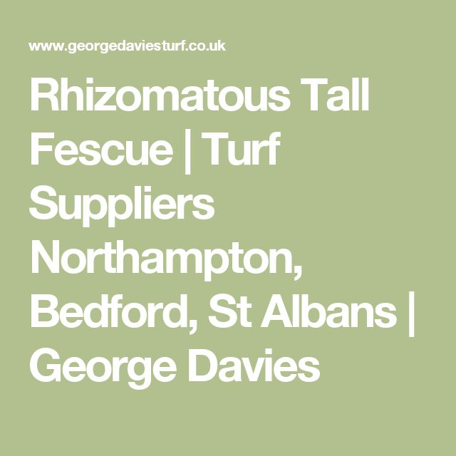 Rhizomatous Tall Fescue | Turf Suppliers Northampton, Bedford, St Albans | George Davies