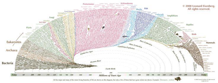 Tree of Evolution (Large).png (2420×933)